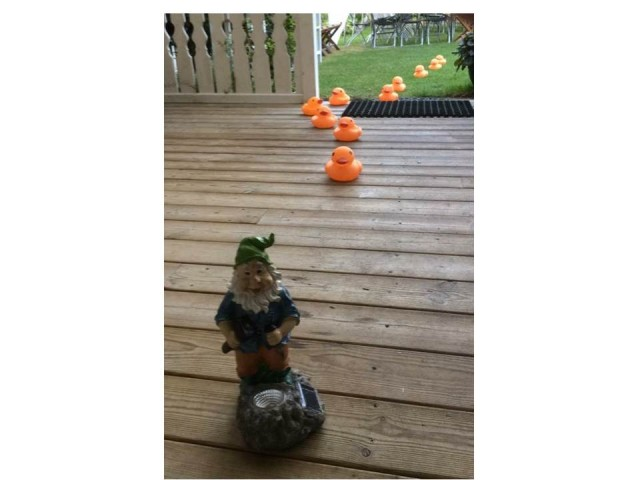 Gnome home infestation